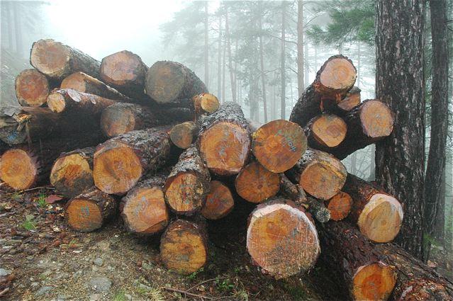 Amendement - filière bois : pour des forêts gérées en futaie irrégulière